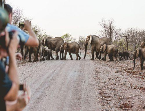 African braai in the Kruger National Park
