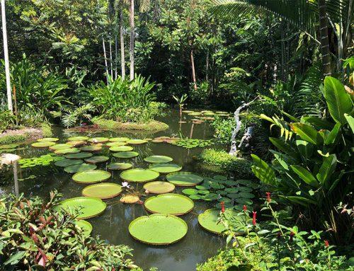 Een hete wandeling door de Singapore Botanic Gardens