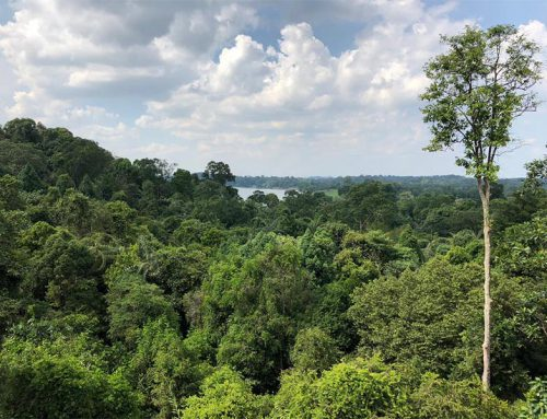 TreeTop Walk in MacRitchie with monkeys