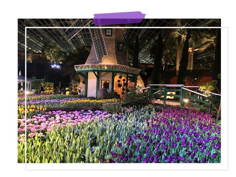 Gardens by the Bay Tulipmania Singapore