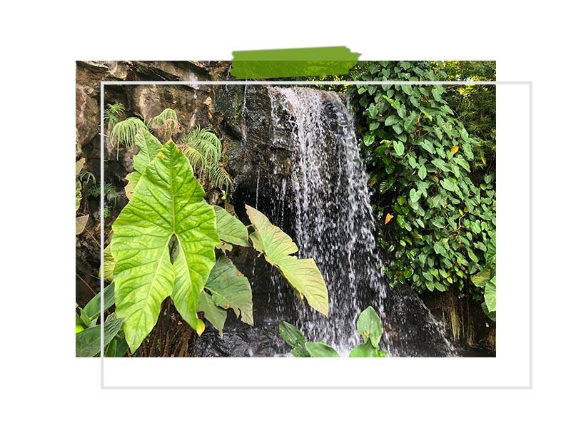 Waterfalls Singapore Botanic Gardens