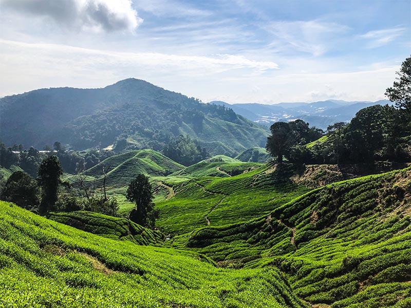 Cameron Highlands Kuala Lumpur Malaysia
