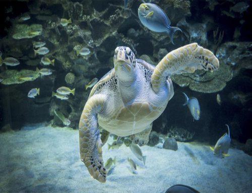 Aquaria KLCC: de ultieme ervaring in de cage rage