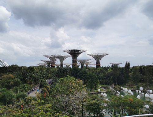 Gardens by the Bay in Singapore: fun facts