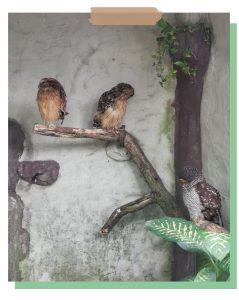 Malaysian Bird Park