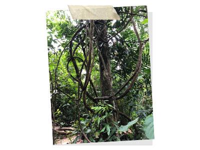 The trees in Taman Tugu