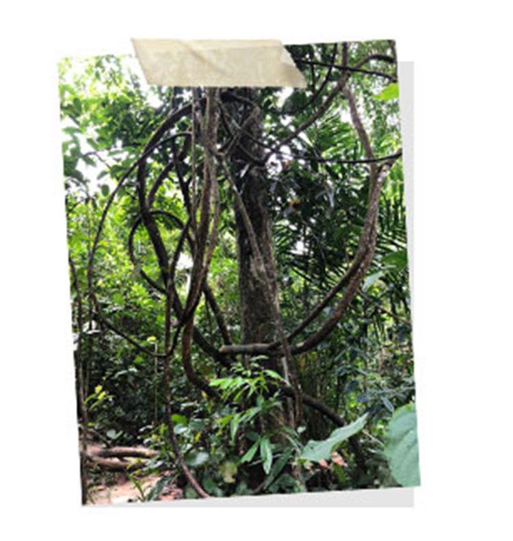 Forest in Taman Tugu