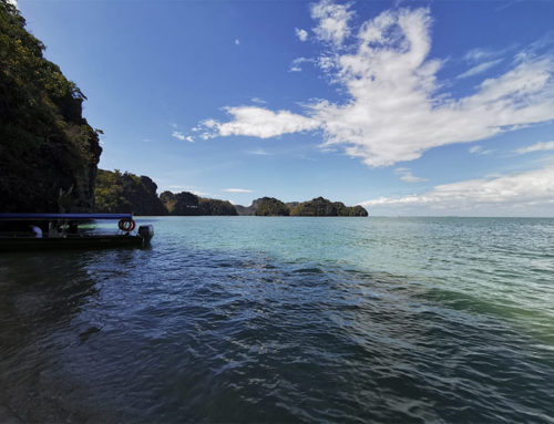 Mangrove tour in Kilim Geoforest Park op Langkawi