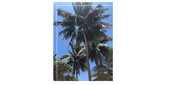 Picture of palm trees