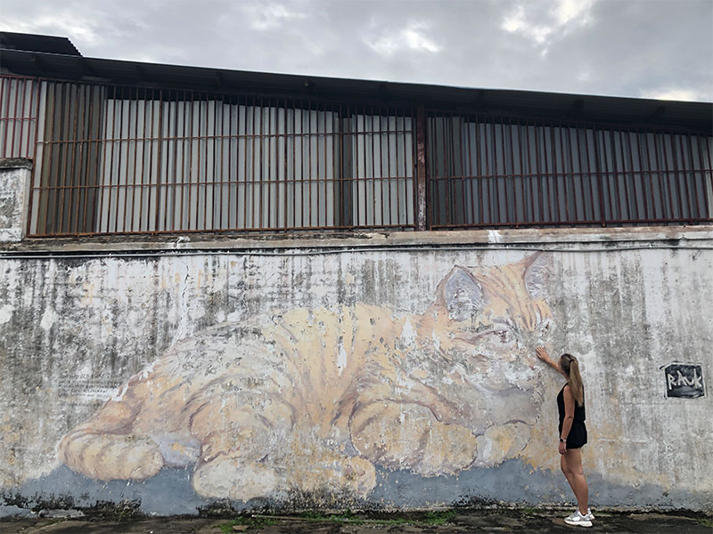 'Giant cat' Georgetown
