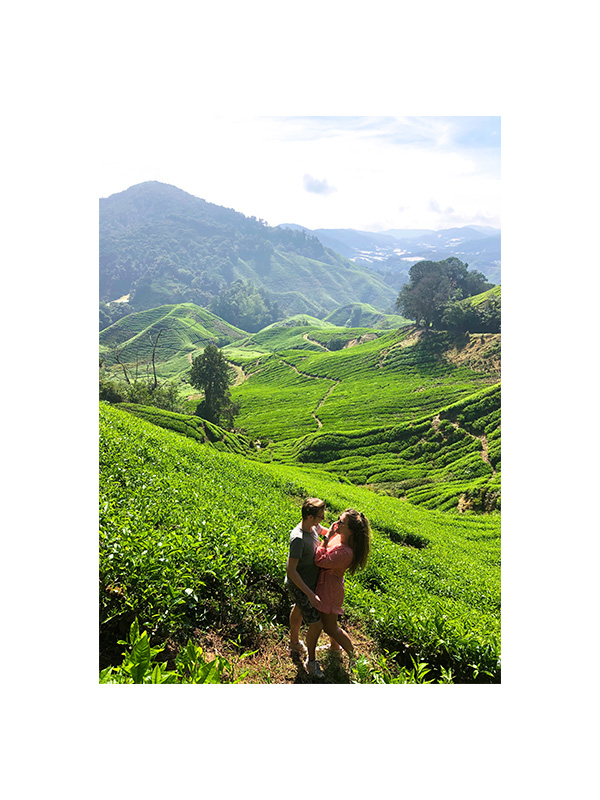 Image of the tea plantages in the Cameron Highlands