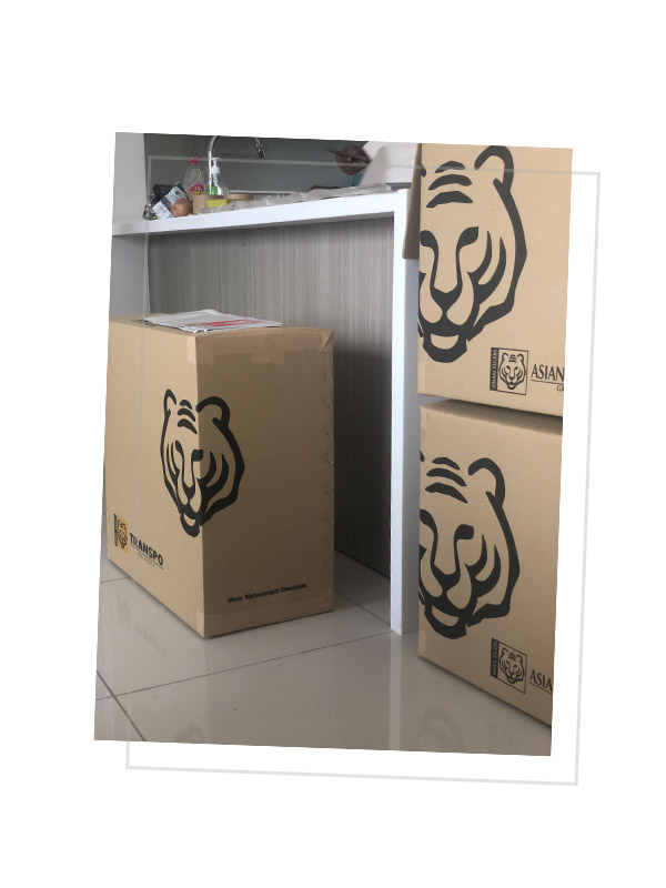 Boxes Asian Tigers